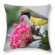 Olive-backed Sunbird Male With Flower Throw Pillow