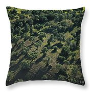 Olive Farmland In Spain Throw Pillow