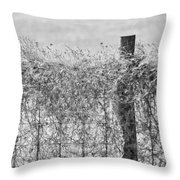 On The Fence Bw Throw Pillow