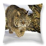 On The Prowl Throw Pillow by Jack Milchanowski
