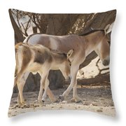 Onager Equus Hemionus 1 Throw Pillow