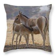 Onager Equus Hemionus 2 Throw Pillow