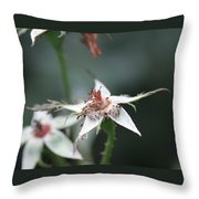Once So Vibrant Rose Throw Pillow