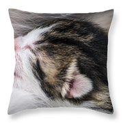 One Day Old Kitten Breastfeeding Throw Pillow