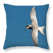 One Good Tern Throw Pillow