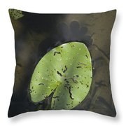 One Of The Leaves Of Nymphaea Alba In Park Presikhaaf In Arnhem Netherlands Throw Pillow
