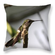 One Out Of Place - Hummingbird Throw Pillow