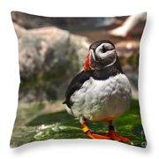 One Puffin Bird Art Prints Throw Pillow