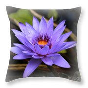 One Purple Water Lily With Vignette Throw Pillow