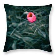One Single Pink Tulip  Throw Pillow