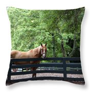 One Very Pretty Hilton Head Island Horse Throw Pillow