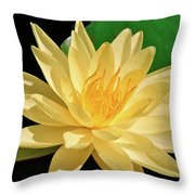 One Water Lily  Throw Pillow