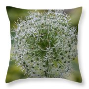 Onion Seeds Throw Pillow