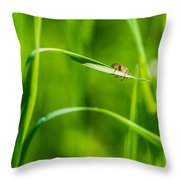 Oops Ooover-load - Featured 2 Throw Pillow