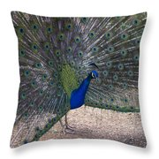 Open Feathers Throw Pillow