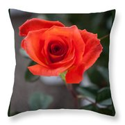 Opened Rose Bud Throw Pillow