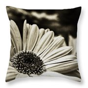 Openly Honest Throw Pillow by Tanya Jacobson-Smith