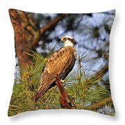 Opulent Osprey Throw Pillow by Al Powell Photography USA