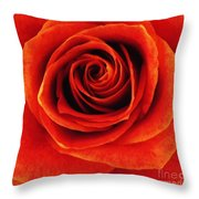 Orange Apricot Rose Macro With Oil Painting Effect Throw Pillow
