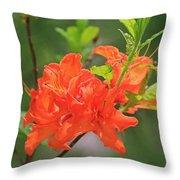 Orange Azalea At Moore State Park Throw Pillow