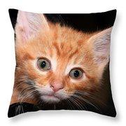 Orange Baby Throw Pillow