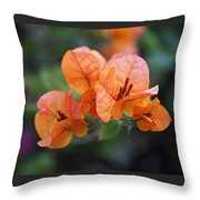 Orange Bougainvillea Throw Pillow