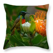 Orange-breasted Sunbird II Throw Pillow