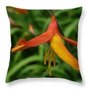 Orange Crocosmia  Throw Pillow