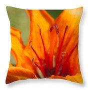 Orange Daylily Closeup Throw Pillow