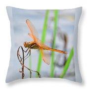 Orange Dragonfly On The Water's Edge Throw Pillow
