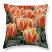 Orange Dutch Tulips Throw Pillow
