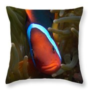 Orange Face Anemonefish Throw Pillow