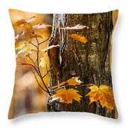 Orange Fall Maple Throw Pillow by Elena Elisseeva