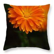 Orange Feathers Throw Pillow