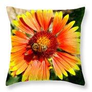 Orange Fiery Gaillardia Flower And Bee Macro Throw Pillow