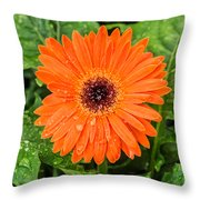 Orange Gerber Daisy 2 Throw Pillow