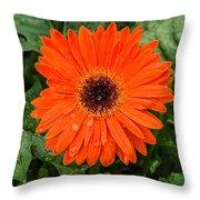 Orange Gerber Daisy 3 Throw Pillow