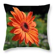 Orange Gerbera Daisy Throw Pillow