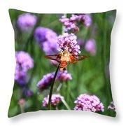 Orange Hummingbird Moth Throw Pillow