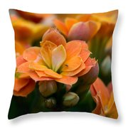 Orange Kalanchoe With Company Throw Pillow