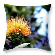 Orange Lehua On Volcano Ranch Throw Pillow