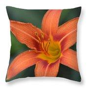 Orange Lily Photo 6 Throw Pillow