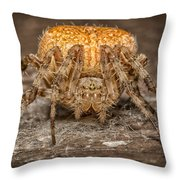 Orange Marbled Orb Weaver Throw Pillow