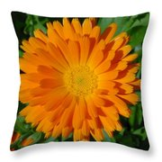 Orange Marigold Close Up With Garden Background Throw Pillow