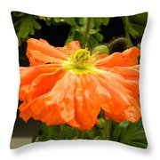 Orange Skirted Poppy  Throw Pillow