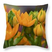 Orange Stars - Floral - Ornithogalum Dubium - Sun Stars Throw Pillow