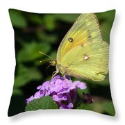 Orange Sulphur Throw Pillow