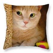 Orange Tabby Cat In Cat Condo Throw Pillow