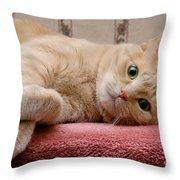 Orange Tabby Cat Lying Down Throw Pillow
