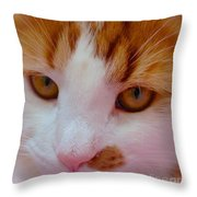 Orange Tabby Kitten Throw Pillow